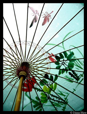 japanese umbrella by ButterflyBlew