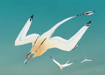 Mammalian Seagulls by GlaxusPlaxus