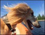 Buster on Board by swandog