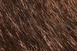 Fur Texture by Kikariz-Stock