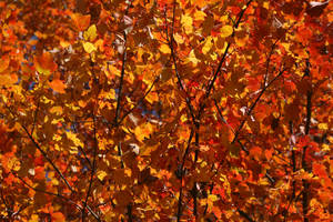 Autumn Stock by Kikariz-Stock