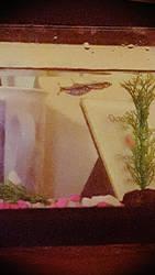 My fish uwu by Deerlover45