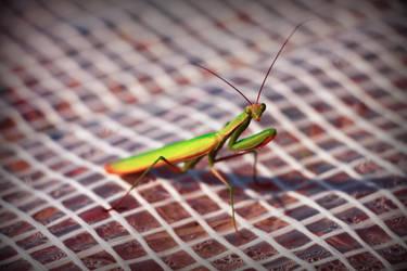 praying mantis by x-dream-on-x