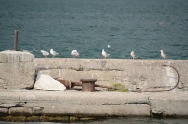 Harbor Gulls by 0149