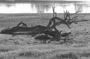 Dragon along the river by flepi