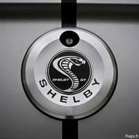 Shelby logo by flepi