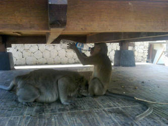 Thirsty Monkey by Venso-Howlie