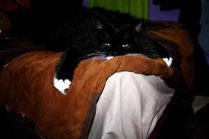Lazy Kitty by JadeAndSapphireArts