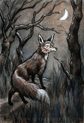 Red Fox and Moon by shmeeden
