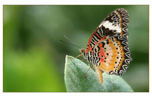 schmetterling XII by hepiladron