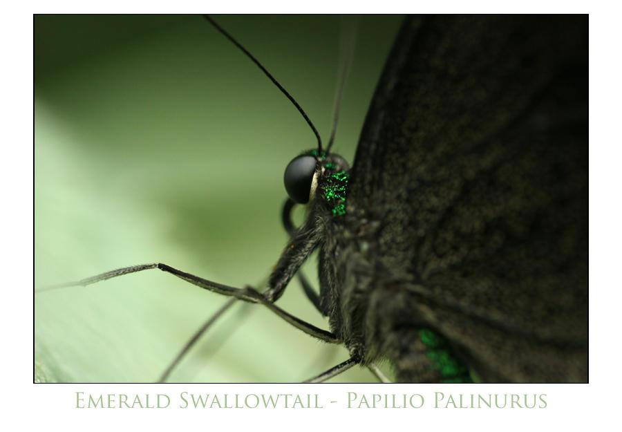 Schmetterling XVIII by hepiladron
