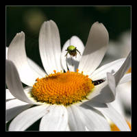 Marguerite.1 by hepiladron