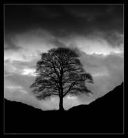 Solitude by LordLJCornellPhotos