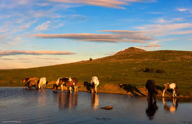 You can take a horse to water....oh ! by LordLJCornellPhotos