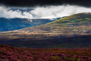 Sparkling heather by LordLJCornellPhotos