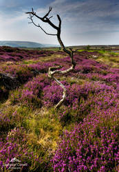 Dancing on the moor by LordLJCornellPhotos