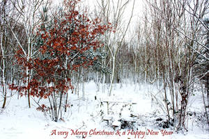 A very Merry Christmas and a Happy New Year by LordLJCornellPhotos