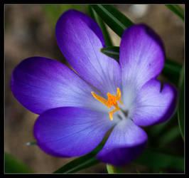 A purple present. by LordLJCornellPhotos