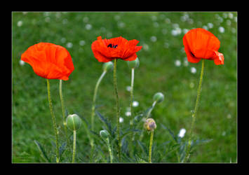 Remembrance by LordLJCornellPhotos