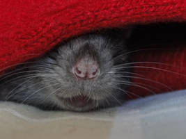 My little cute nose by luckysunflower