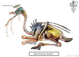 quart-brachium struthio by Vincent-Covielloart