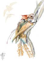 Ariel arrow head by Vincent-Covielloart
