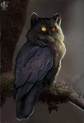 Owl-Cat by Vincent-Covielloart