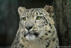 Snow Leopard - Look by EricKemphfer