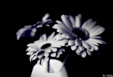 herb by fotoinsan