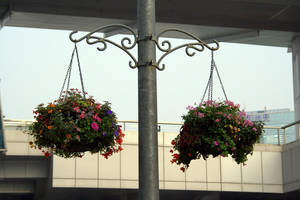 Day 270: Flower Baskets by coolwanglu