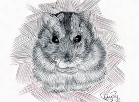 Cookie -Ballpoint- by Cindy-R