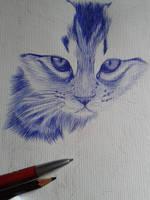 Kitten WIP by Cindy-R