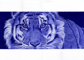 _Blue Ballpen Tiger_ by Cindy-R
