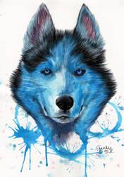 Blue Wolf by Cindy-R