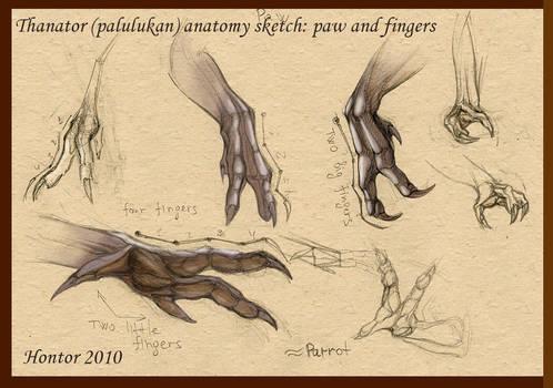 Thanator anatomy sketch_3 by hontor