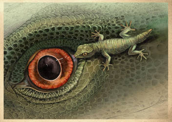 Gecko-companion by hontor