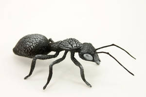 Ant by hontor