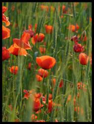 Poppy III by FeliDae84