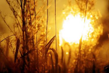 Feels like summer by FeliDae84