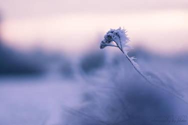 Ein Hauch von Frost by FeliDae84