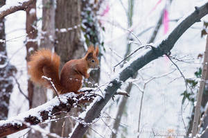 Winter morning by FeliDae84