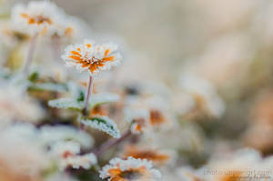 Frozen morning IV by FeliDae84