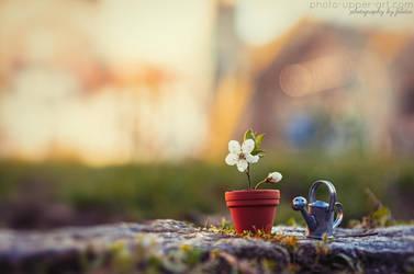 Miniature spring - I by FeliDae84