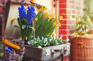 Spring on board by FeliDae84