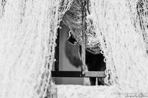 Hide and Seek by FeliDae84