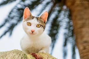 Curious kitty by FeliDae84