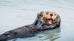 Sea Otter I by FeliDae84