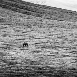 Denali NP - I by FeliDae84