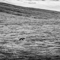 Denali NP - II by FeliDae84