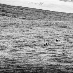 Denali NP - III by FeliDae84